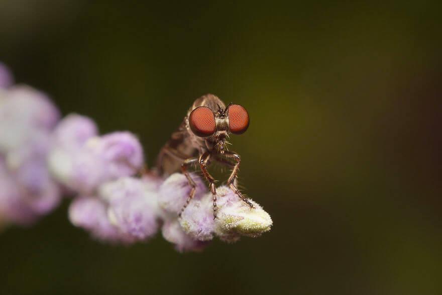 Ктырь, фотографий насекомых и пауков