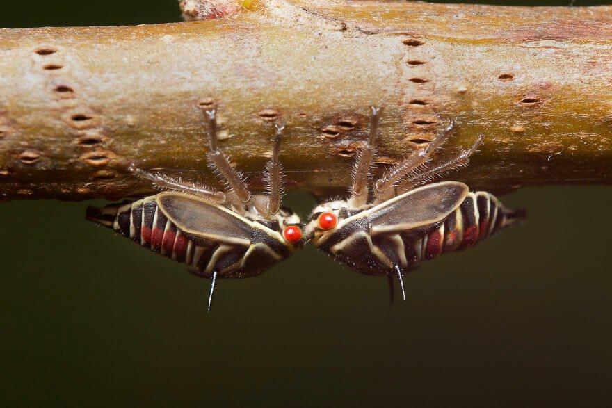 Личинки дубовой горбатки, фотографий насекомых и пауков