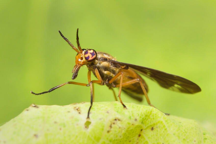 Слепень, фотографий насекомых и пауков