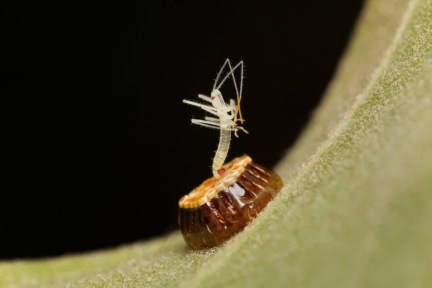 фотографий насекомых и пауков, жук-убийца