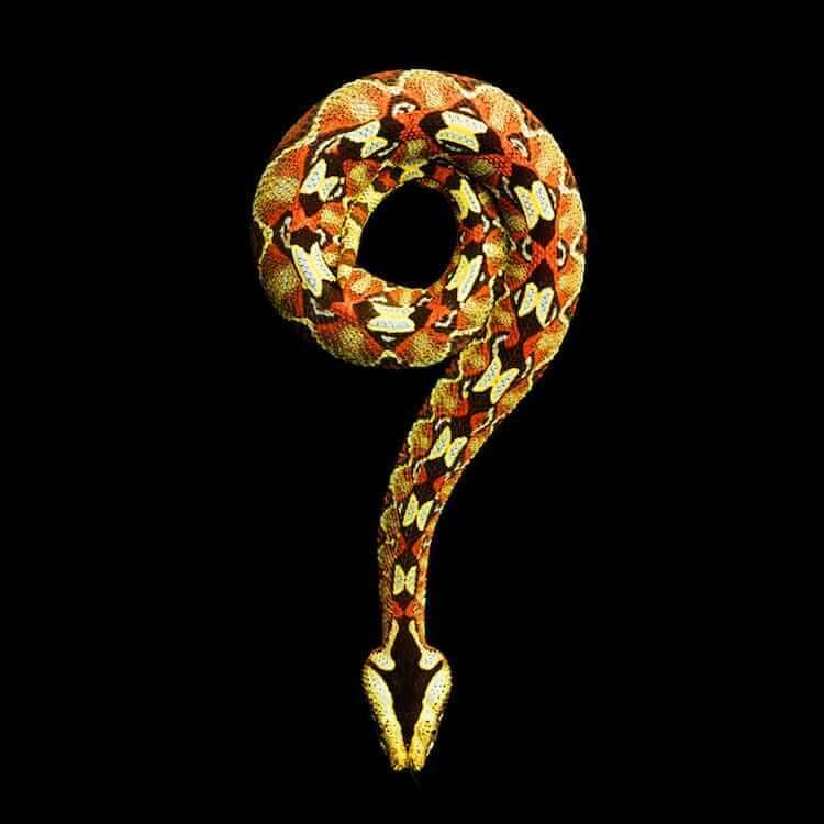 Фотографии ядовитых змей, фото 1