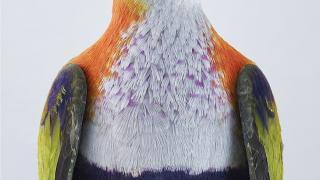 портреты пернатых, личность изображенной птицы, фото 1