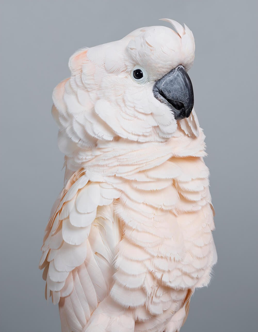 портреты пернатых, личность изображенной птицы, фото 2