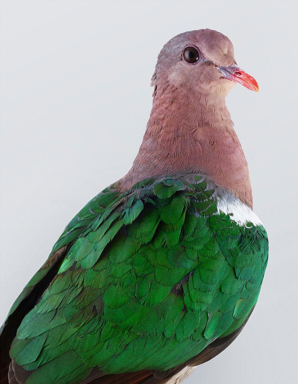портреты пернатых, личность изображенной птицы, фото 3