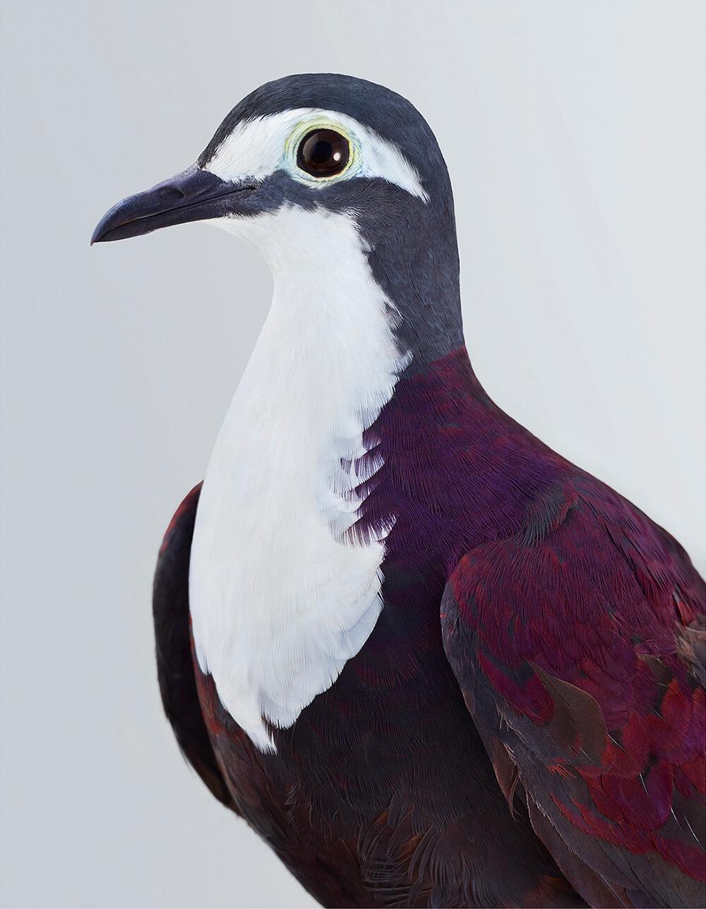 портреты пернатых, личность изображенной птицы, фото 4
