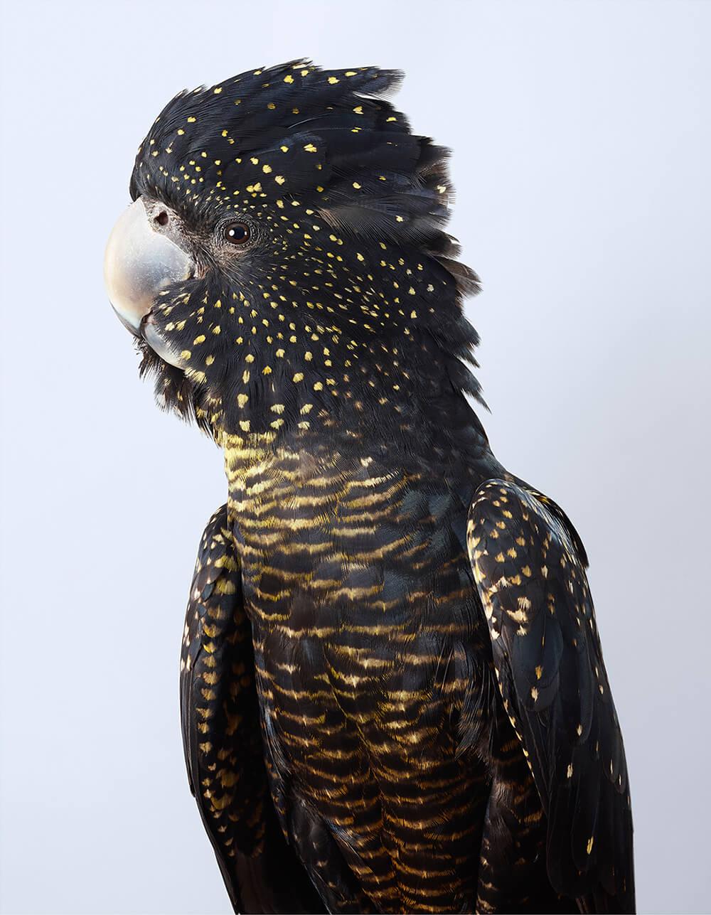 портреты пернатых, личность изображенной птицы, фото 5