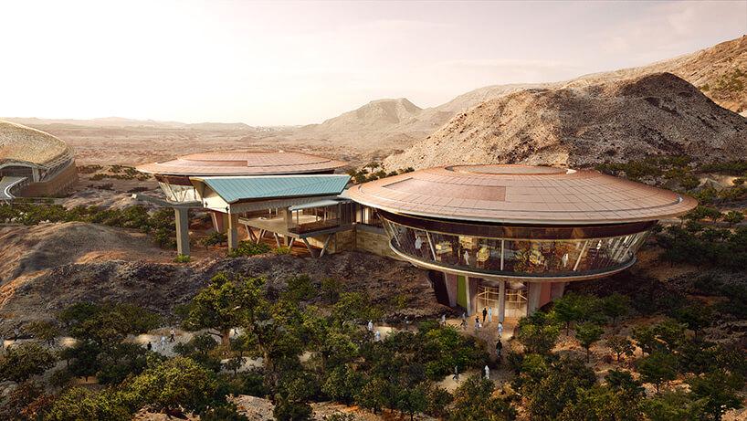 Оманский ботанический сад, фото 6