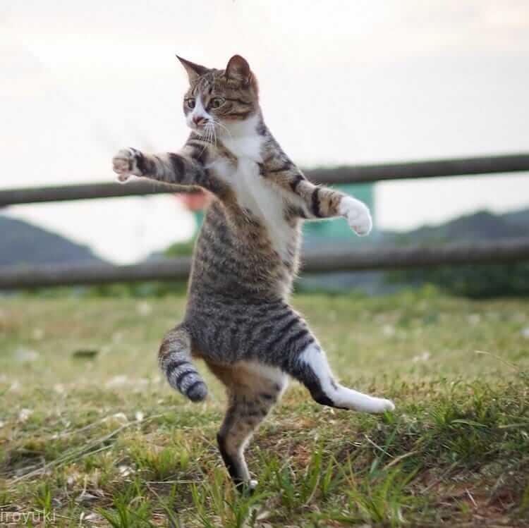 Кошки ниндзя, фото 16