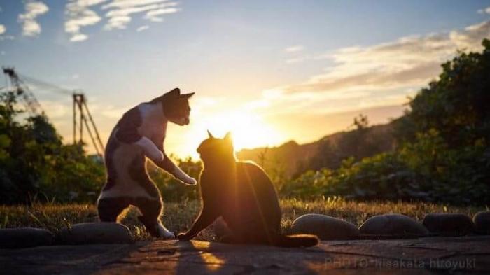 Кошки-ниндзя на фотографиях Хисаката Хироюки
