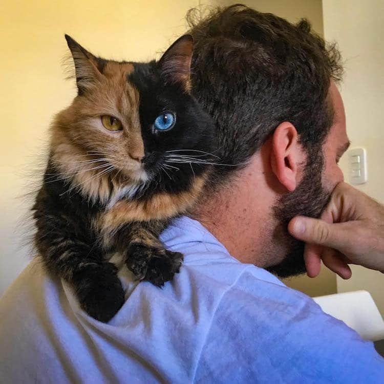 Кошка химера, фото 8