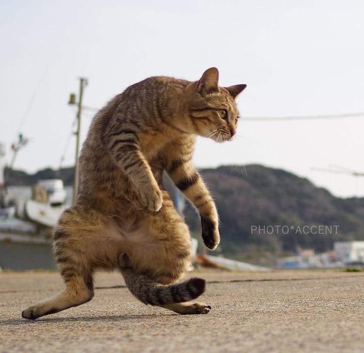 Кошки ниндзя, фото 1