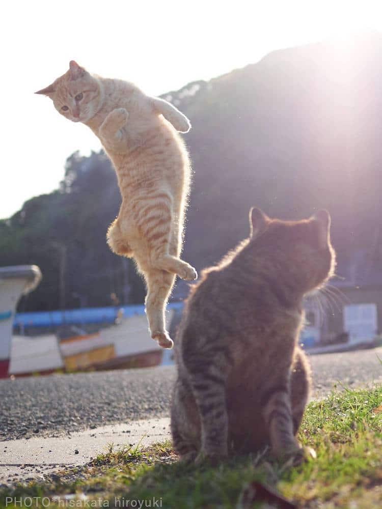 Кошки ниндзя, фото 8