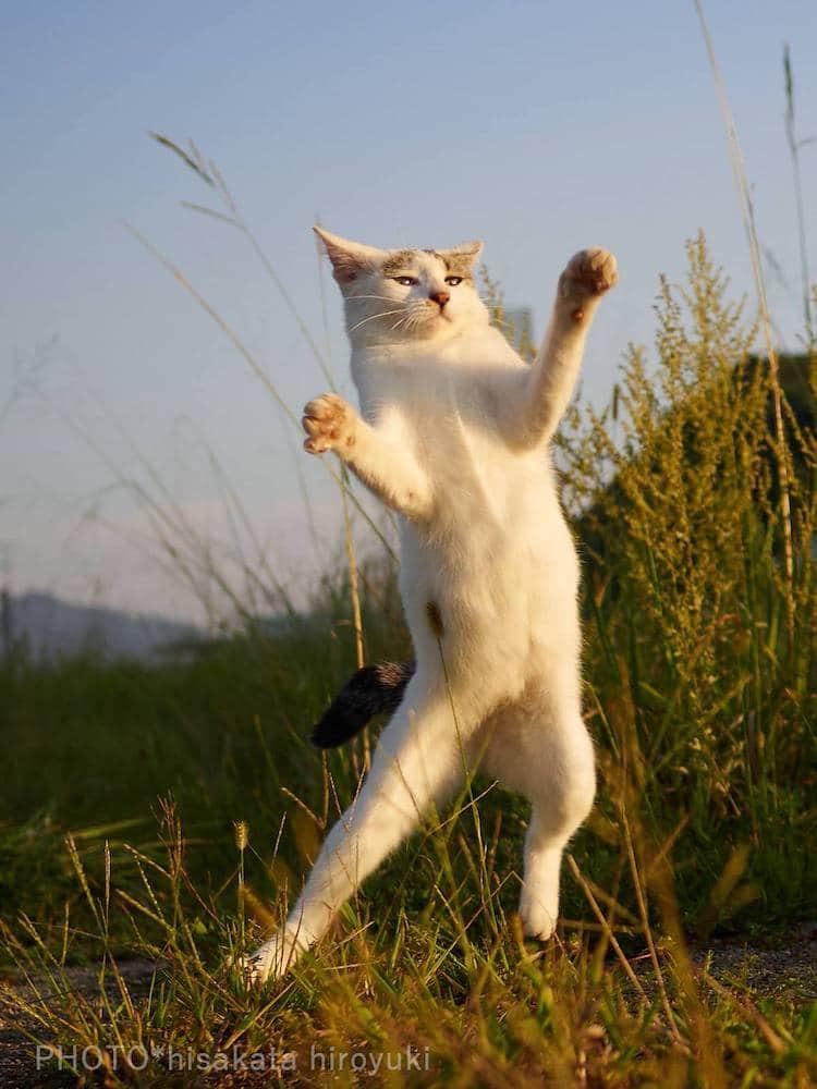 Кошки ниндзя, фото 9