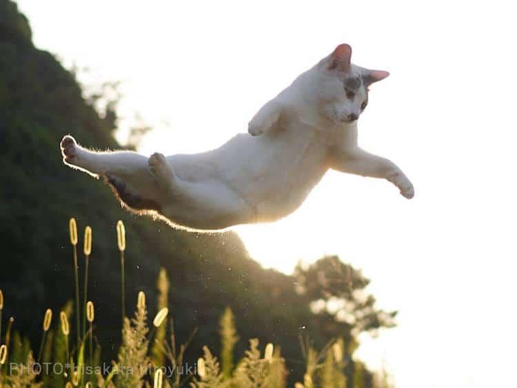 Кошки ниндзя, фото 10
