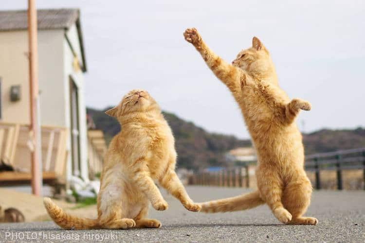 Кошки ниндзя, фото 11