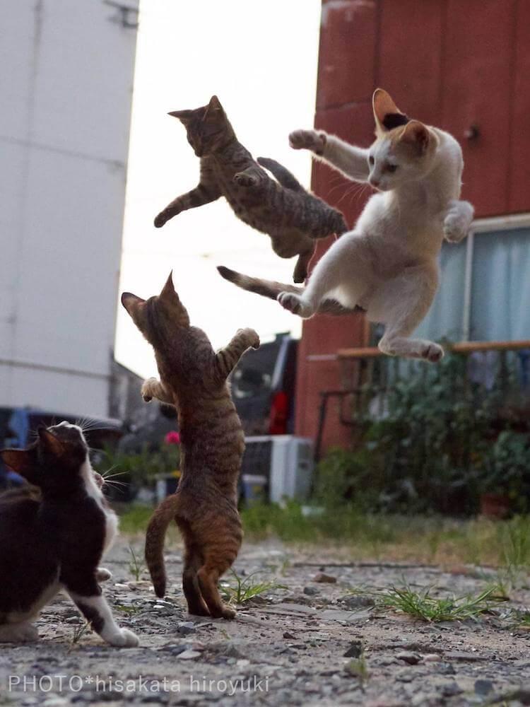 Кошки ниндзя, фото 12
