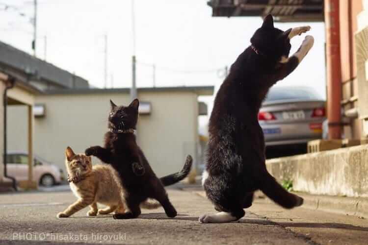 Кошки ниндзя, фото 13