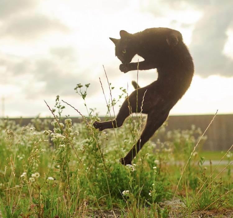 Кошки ниндзя, фото 2