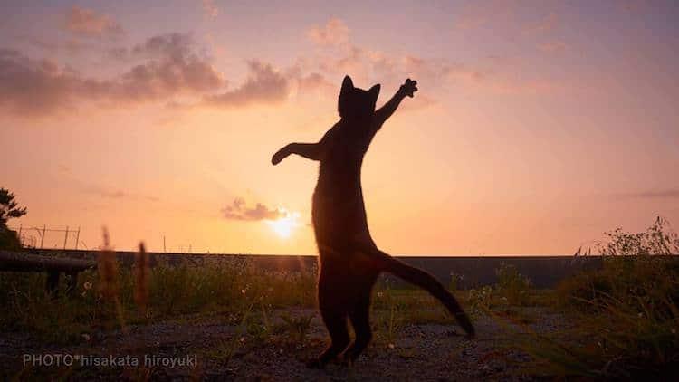 Кошки ниндзя, фото 3