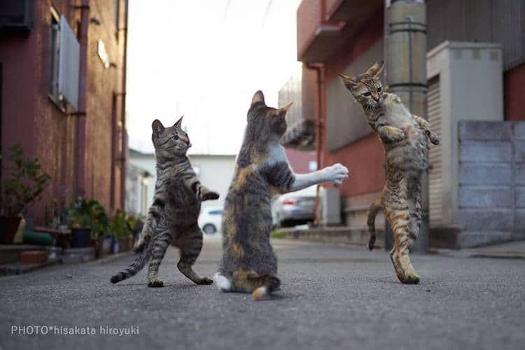 Кошки ниндзя, фото 4