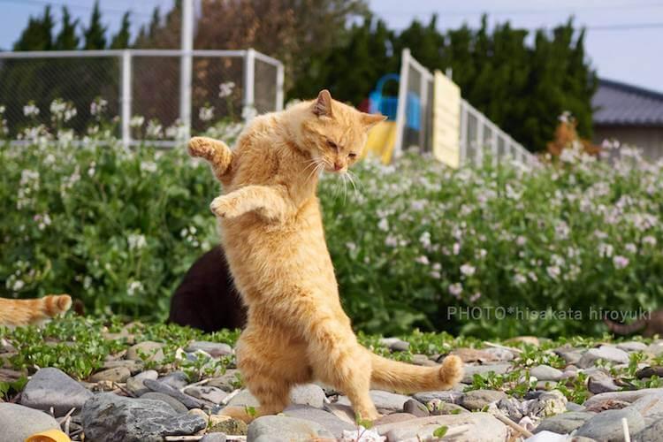 Кошки ниндзя, фото 5