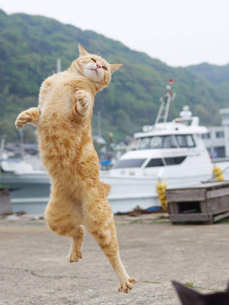 Кошки ниндзя, фото 7