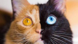 Кошка химера, фото 1