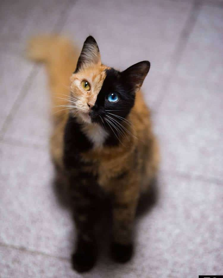 Кошка химера, фото 3