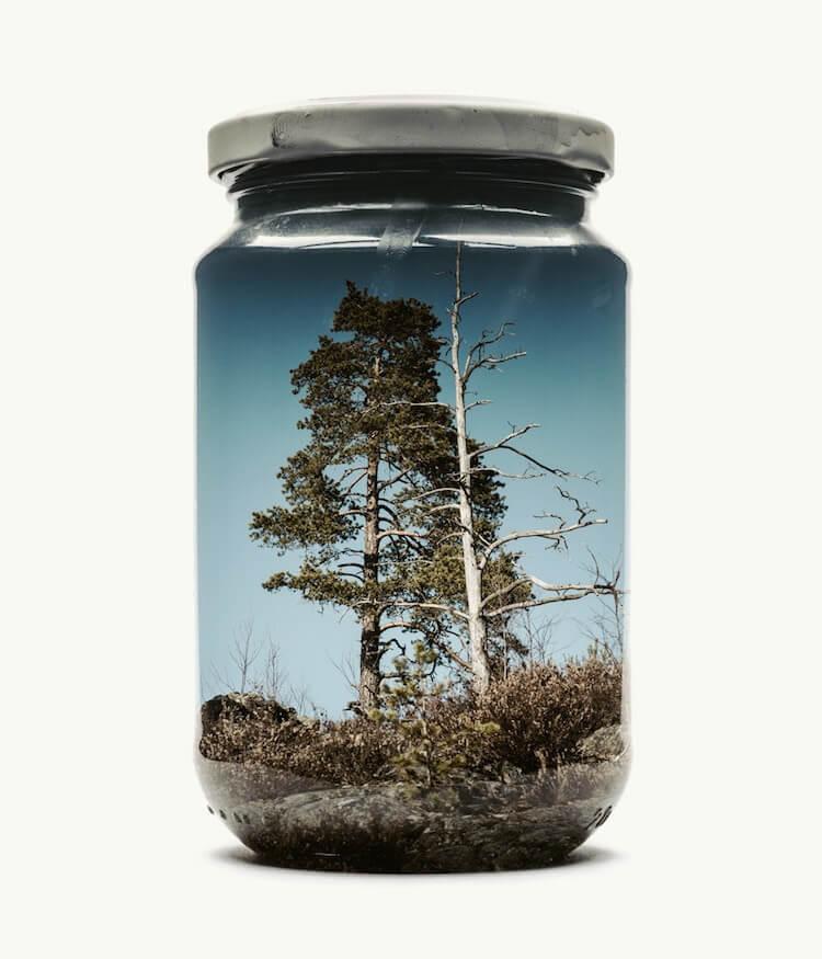 Фотографии природы в стекляных банках, фото 2