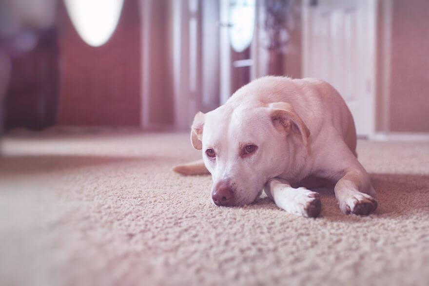 собака из приюта, фото 10