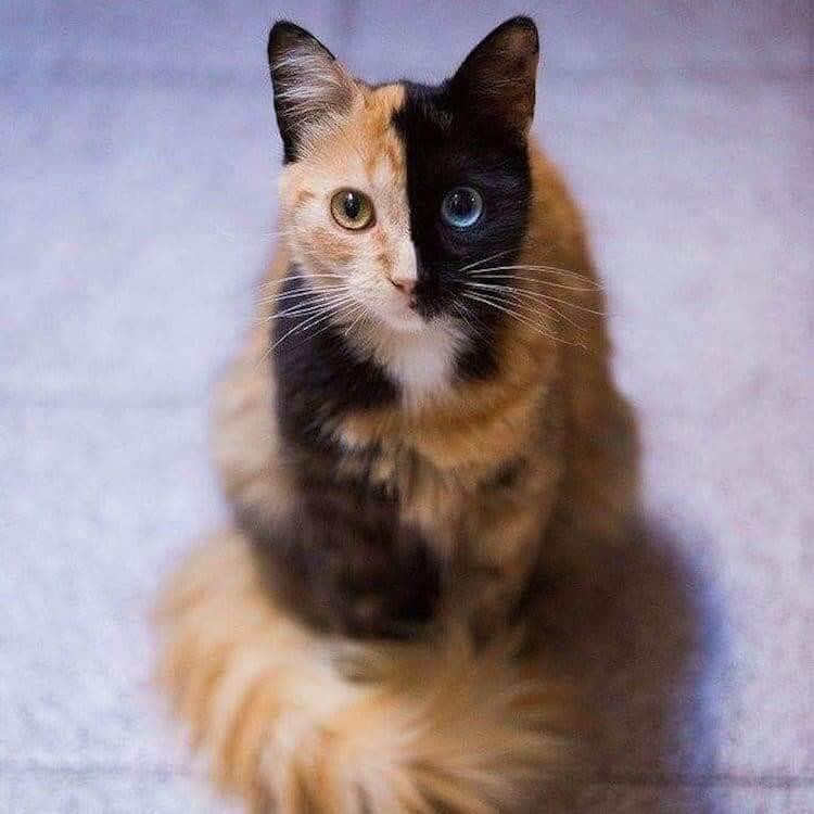Кошка химера, фото 7