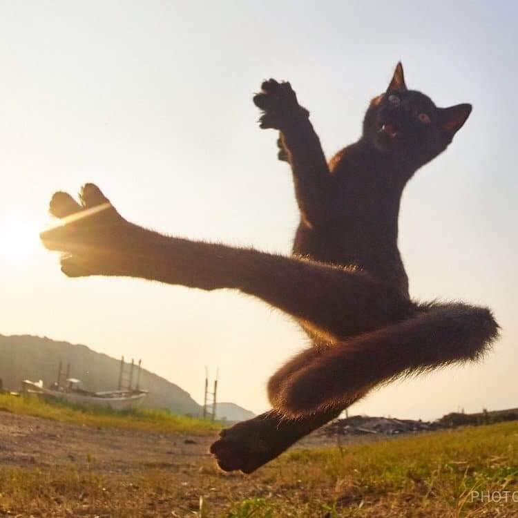 Кошки ниндзя, фото 14