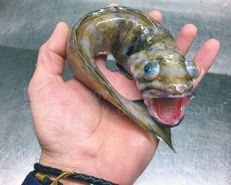 Глубоководные рыбы, фото 2
