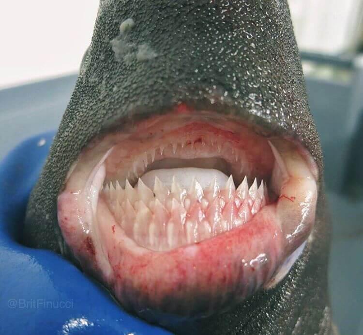 Глубоководные рыбы, фото 4
