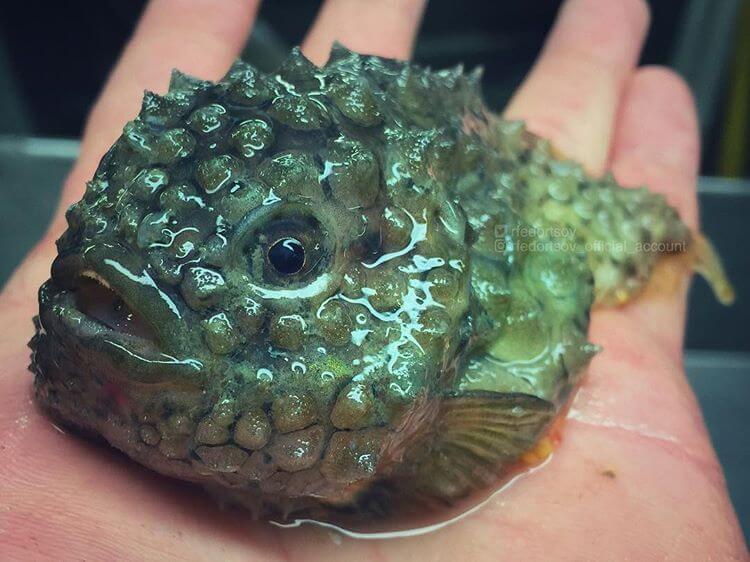 Глубоководные рыбы, фото 10