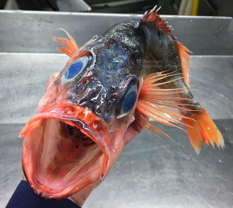 Глубоководные рыбы, фото 12