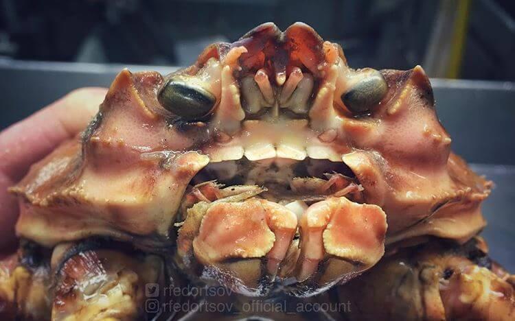 Глубоководные рыбы, фото 15