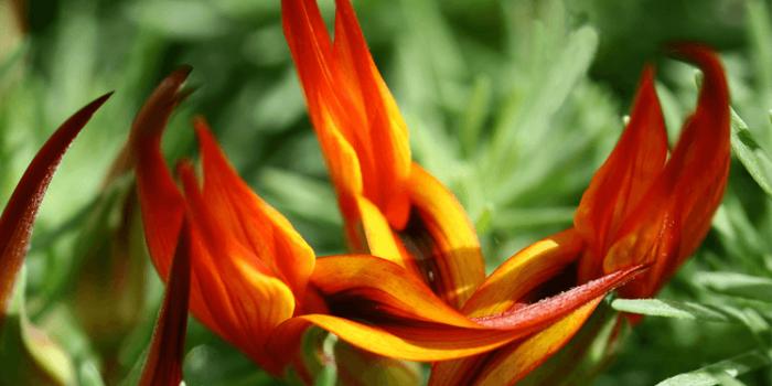 Топ-5 самых красивых и редкостных цветов в мире