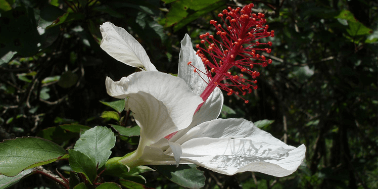 Самые редкие цветы, фото 3