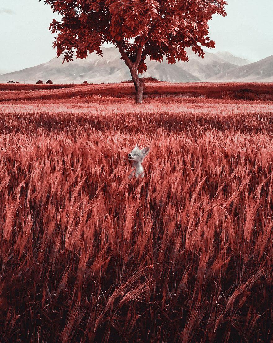 мир глазами дальтоников с тританопией, фото 1