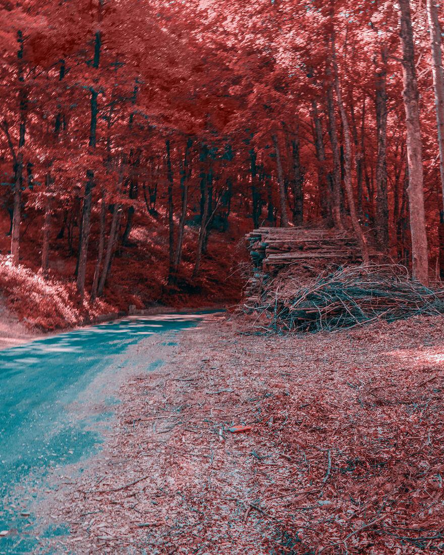 мир глазами дальтоников с тританопией, фото 13