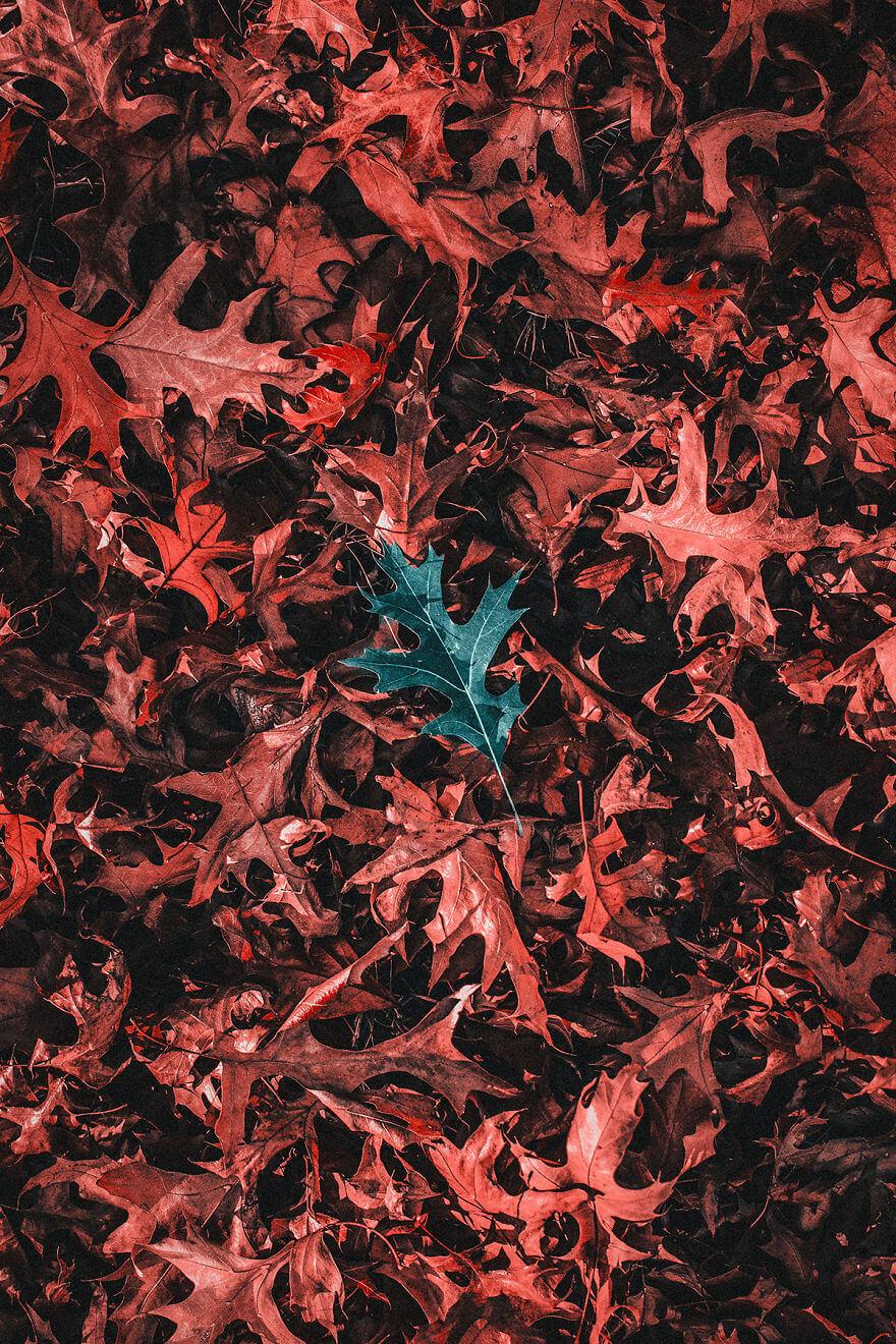 мир глазами дальтоников с тританопией, фото 7
