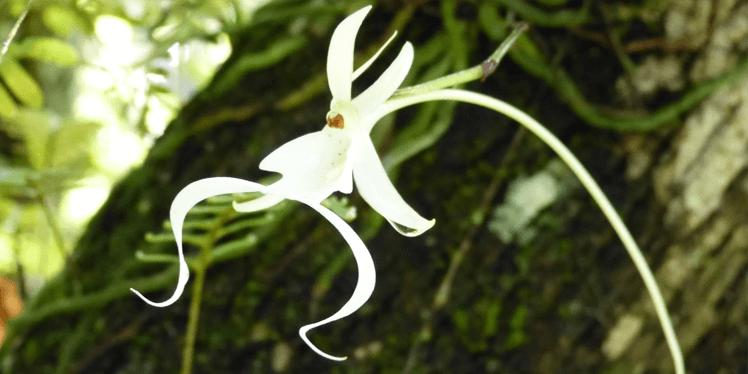 Самые редкие цветы, фото 5