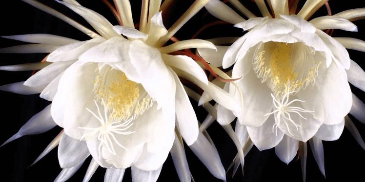 Самые редкие цветы, фото 4