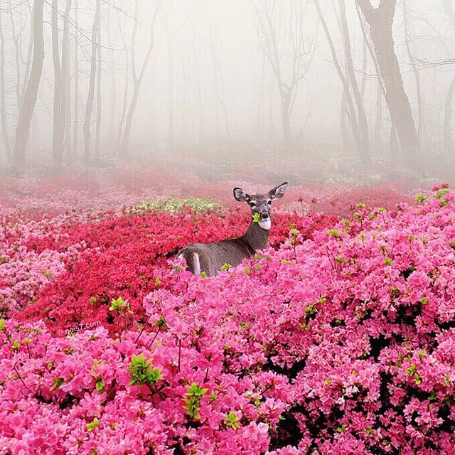 Сказочные фотографии животных, мир Роберта Янса, фото 1