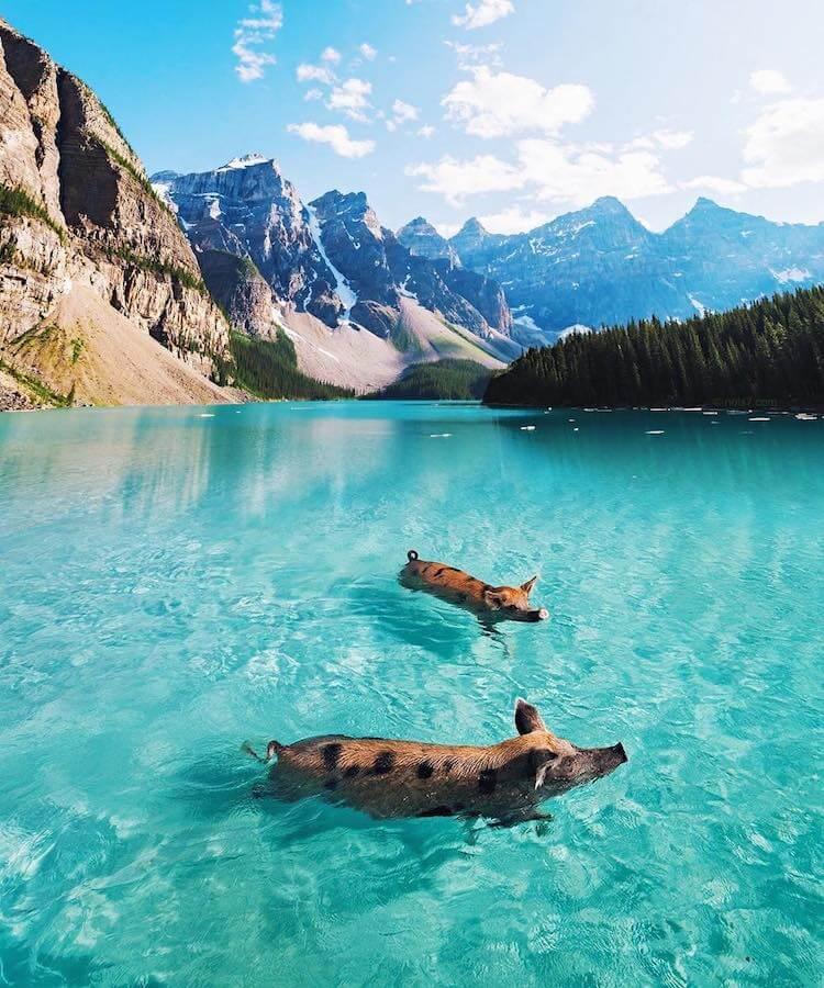 Сказочные фотографии животных, мир Роберта Янса, фото 12