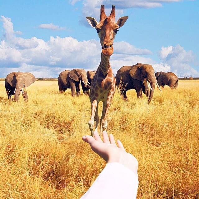 Сказочные фотографии животных, мир Роберта Янса, фото 14