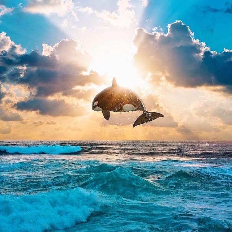 Сказочные фотографии животных, мир Роберта Янса, фото 16