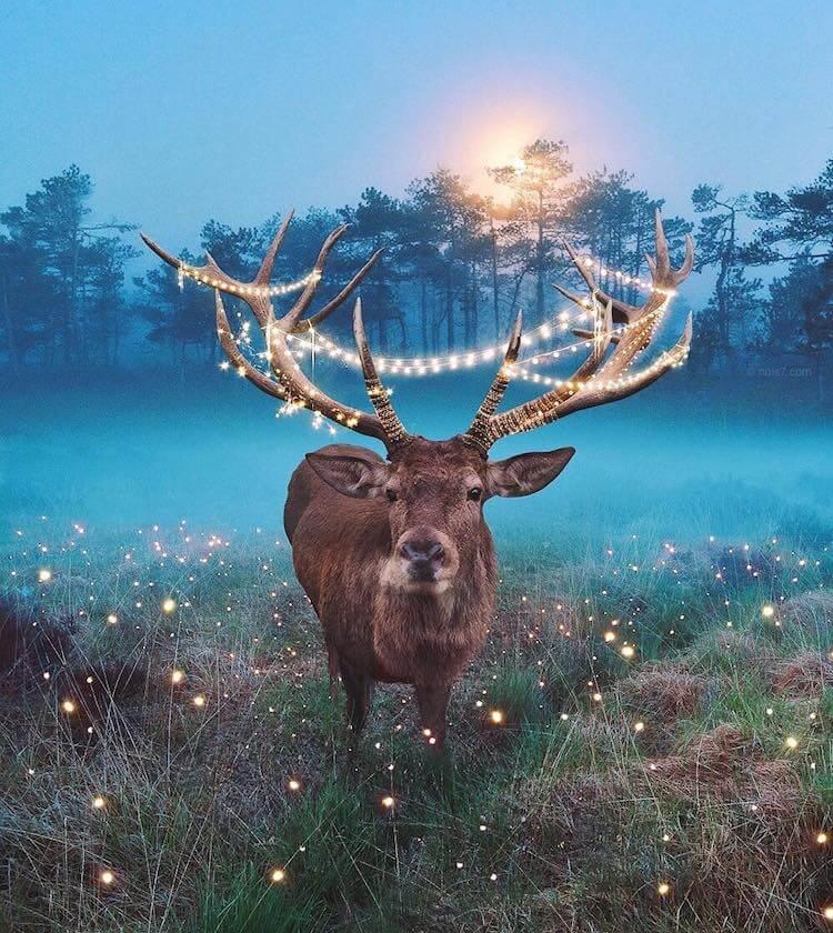 Сказочные фотографии животных, мир Роберта Янса, фото 2