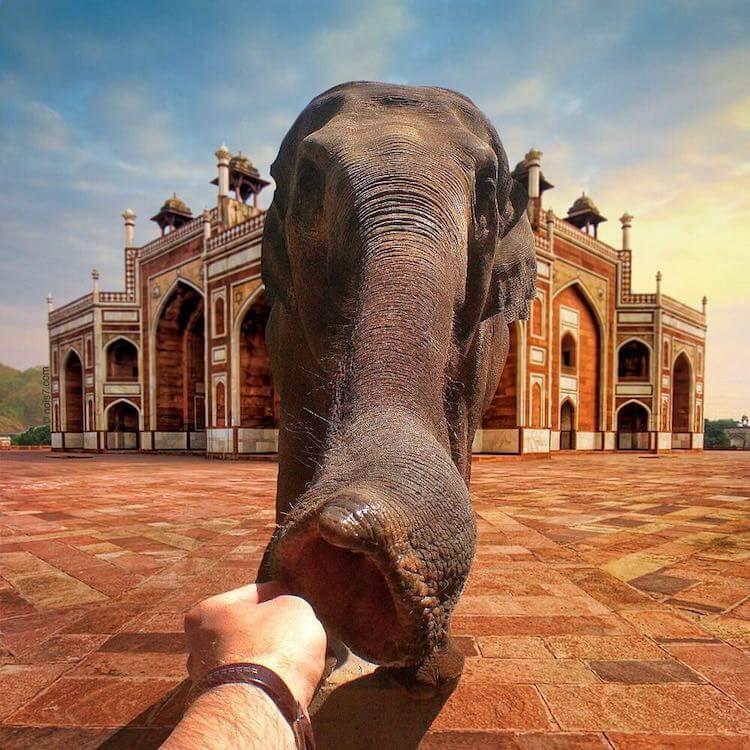 Сказочные фотографии животных, мир Роберта Янса, фото 6